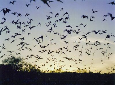 Jeremy Deller, 'Untitled (Bats from Memory Bucket?)', 2003