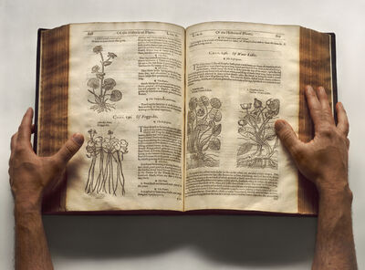 Esther Shalev-Gerz, 'The Open Page - The Herball, or generall historie of plantes', 2009