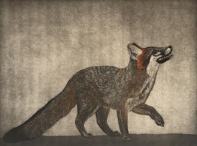 Julia Lucey, 'Gray Fox', 2018