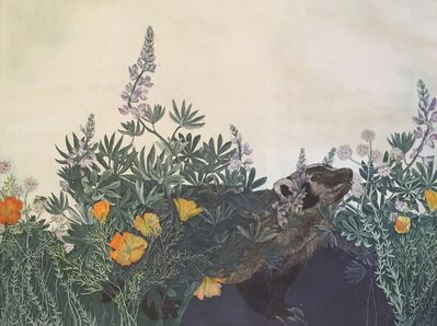 Julia Lucey, 'American Badger in Lupine, Poppies and Wild Buckwheat', 2016