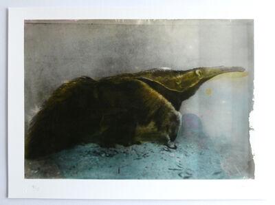 Johannes Brus, 'Anteater', 2019