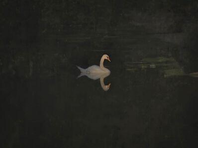 Jack Spencer, 'Lancaster Swan ', 2016