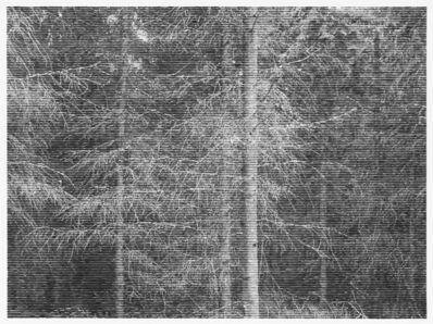 Christiane Baumgartner, 'Wald bei Volditz V, 2014', 2014