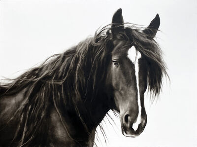 "Kenneth Peloke, '""Meant to Be"" photorealist black and white oil painting, a portrait of a horse', 2020"