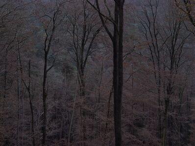 Michael Lange, 'WALD | Landscapes of Memory#6254', 2011