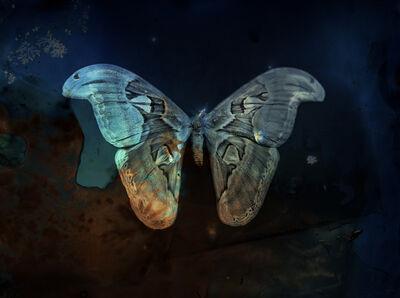 Keith Carter, 'Blue Moth Atlas', 2012
