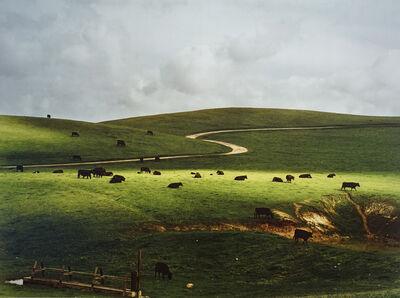 Cole Weston, 'Palo Corona Ranch', 1962