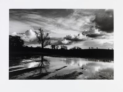 Don McCullin, 'A flooded field near my house in Somerset', 2016
