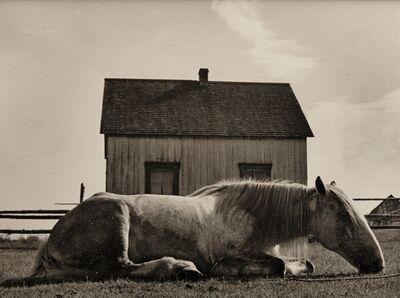 Walter Rosenblum, 'Horse, Canada', 1945