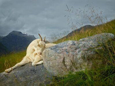 R. J. Kern, 'Hazel, Geiranger Fjord, Norway', 2013