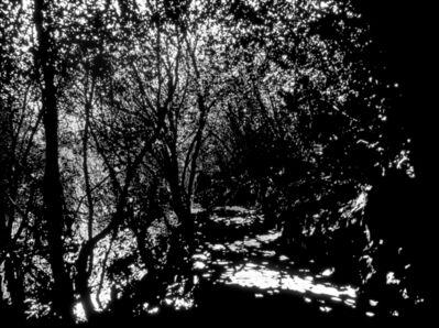 Soo-whan Choi, 'Emptiness_Woodland path', 2016