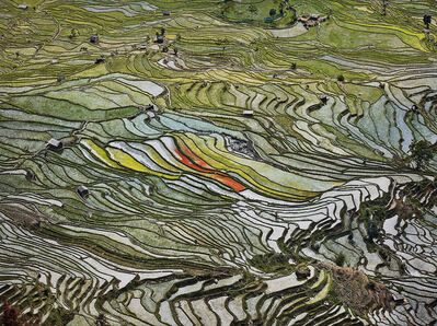 Edward Burtynsky, 'Rice Terraces #2, Western Yunnan Province, China', 2012