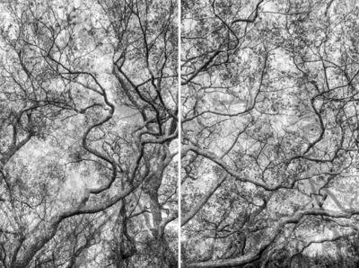 Santeri Tuori, 'Forest #39 ', 2017