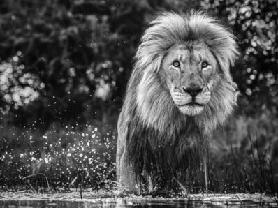 David Yarrow, 'After the Flood', 2020