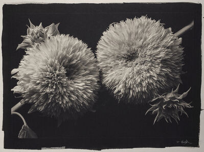 Kenro Izu, 'Still Life 317', 1993