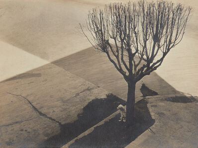 Tina Modotti, 'Untitled, Mexico City', 1924