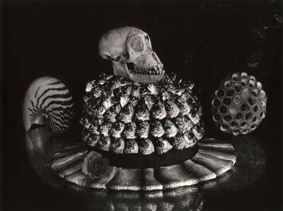 Michiko Kon (今 道子), 'Horse Mackerel, Skull, and Hat', 2001