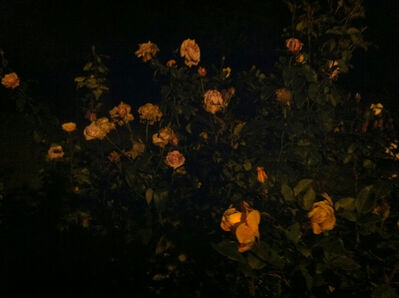 Nathaniel Dorsky, 'Summer 1', 2013