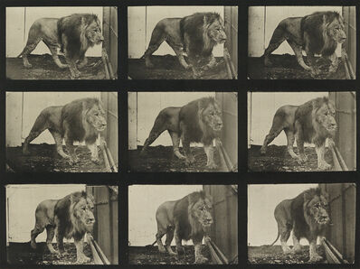 Eadweard Muybridge, 'A selection of 10 plates from Animal Locomotion depicting animals', 1887