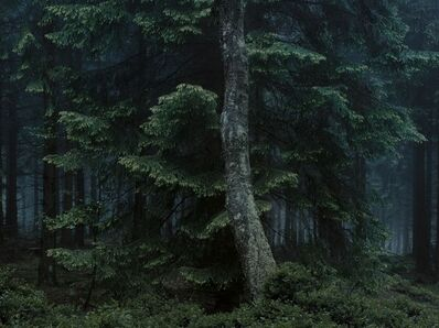 Michael Lange, 'WALD | Landscapes of Memory #6678', 2010