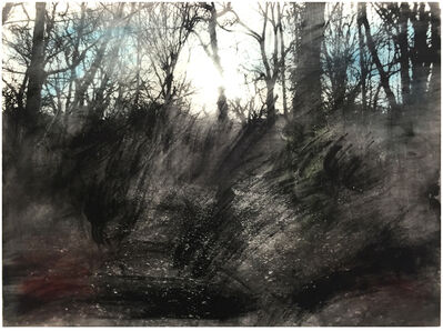 Danny Augustine, 'Queens Wood 1.4', 2016