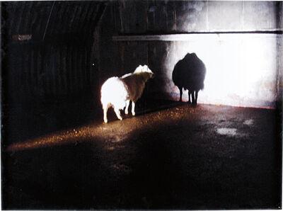 Douglas Gordon, 'Desert', 2008