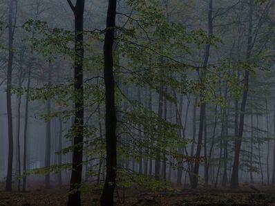 Michael Lange, 'WALD | Landscapes of Memory#2504', 2010