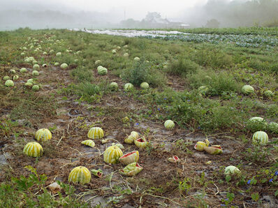 Lucas Foglia, 'Watermelon Patch, Twin Oaks Community, Virginia', 2009
