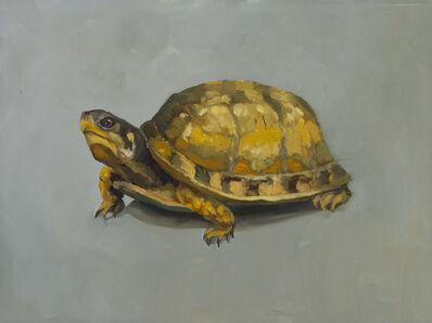 Edwina Lucas, 'Box Turtle', 2017