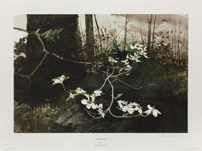 Andrew Wyeth, 'Dogwood 1983 HS', 1983