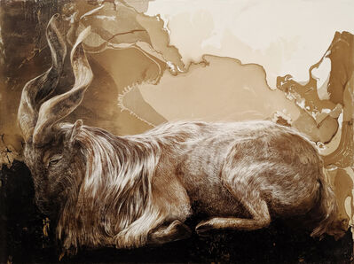 James Griffith, 'Markhor at Rest', 2019