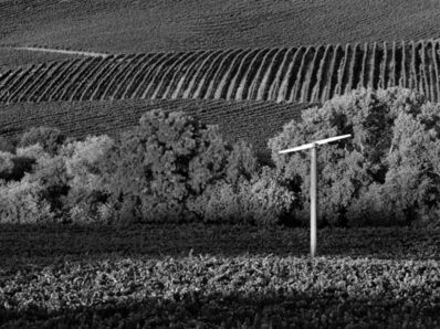 Jim Banks, 'Vineyard and Fan, Napa Valley, CA', 2019
