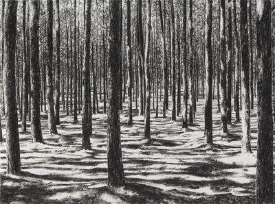 April Gornik, 'Forest Struck By Light', 2015