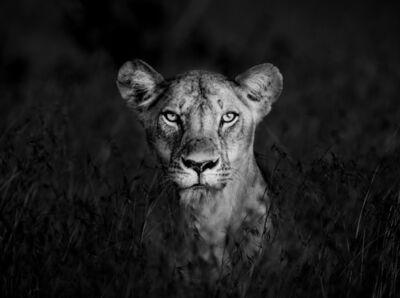 James Lewin, 'Shadow Huntress, Borana, Kenya.', 2019