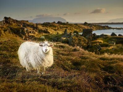 R. J. Kern, 'Eating Buddy, Lake Myvatn, Iceland', 2014