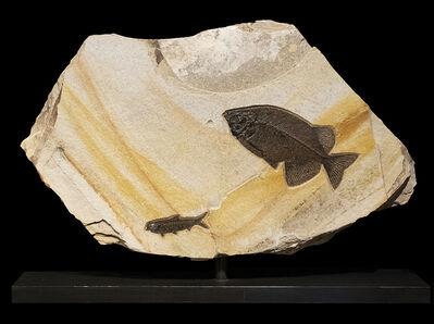 Natural History, 'Jack and Jill', Circa 50 Million Years Old