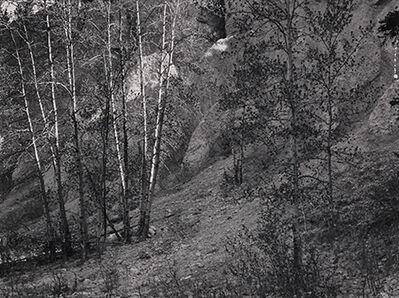 Paul Caponigro, 'Trees, Glacier Park, Vancouver, BC', 1978