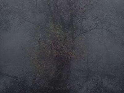 Michael Lange, 'FLUSS R2569', 2012