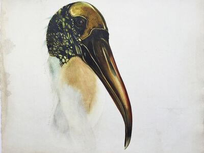 Scott Kelley (b. 1963), 'Wood Ibis', 2008