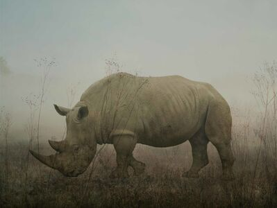 Rory Carnegie, 'Monty, rhino', 2016
