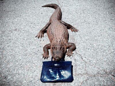 Tyler Shields, 'Gator Birkin ', 2012