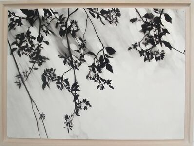 Carlijn Mens, 'Preserved Places, Gorinchem (Sterappelbloesem)', 2017