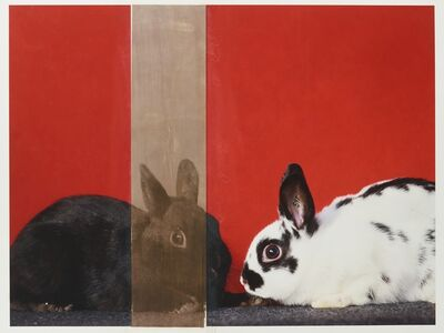 R. J. Kern, 'Supreme Champion Rabbit Male and Female Pair', 2019