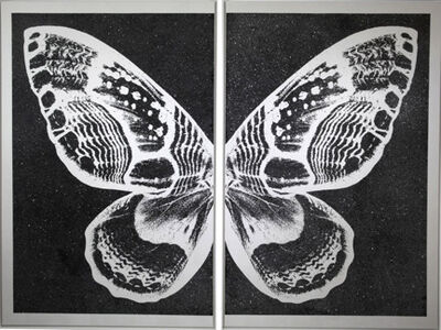 Rubem Robierb, 'Hybrid Pearl Butterfly on Black', 2015