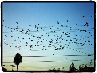 Gregory Bojorquez, 'Birds and Wires', 2002