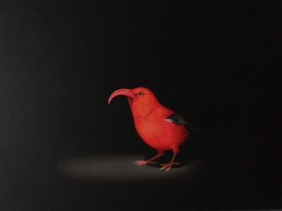 Isabelle du Toit, 'I'iwi', 2018