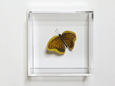 Esther Traugot, 'Brown and silver butterfly', 2020