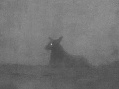 Michal Rovner, 'Night - 6', 2016