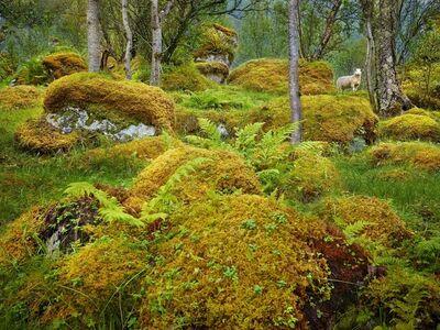 R. J. Kern, 'Olaf, Lofoten Islands, Norway', 2013
