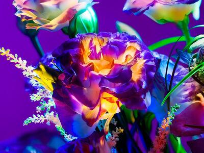 Torkil Gudnason, 'Electric Blossom #282', 2012